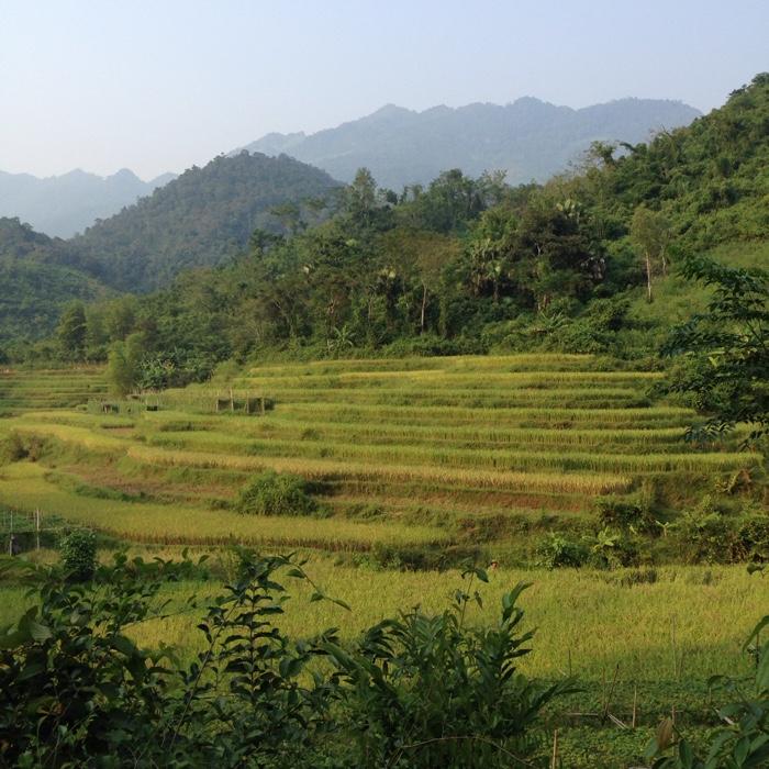 www.singapbyart.com-maichau-paddy-fields.jpg